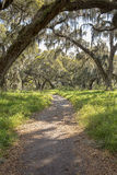 Nature Hiking Trail. A scenic nature hiking trail amongst Spanish moss covered oak trees in a tropical nature preserve Royalty Free Stock Photo