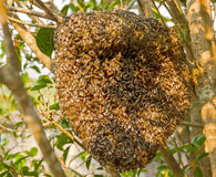 Nature honeycomb Royalty Free Stock Images