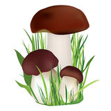 Nature illustration. Mushroom in grass isolated on white background. Stock Image