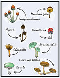 Nature illustration. Natural materials. Forest postcard. Assorted mushrooms. Edible and poisonous mushrooms. Royalty Free Stock Photo