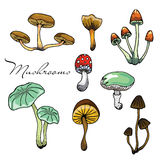 Nature illustration. Natural materials. Forest postcard. Assorted mushrooms. Edible and poisonous mushrooms. Seamless pattern. Stock Photo