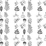 Nature illustration. Natural materials. Forest postcard. Forest fruits, leaves, branches. Black and white seamless pattern. Nature illustration. Natural Royalty Free Stock Photos