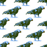 Nature illustration. Post card. Animals from the jungle. Parrot in the zoo. Seamless pattern Royalty Free Stock Photography
