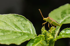 Nature image showing details of insect life: closeup / macro of stock photos