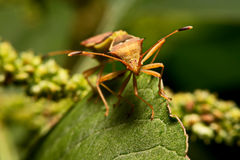 Nature image showing details of insect life: closeup / macro of Stock Photography