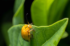 Nature image showing details of insect life: closeup / macro of Royalty Free Stock Photos