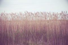 Nature image of tall grass along coastal area Royalty Free Stock Image