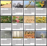 Nature images calendar year 2016. All months layout for print Stock Image