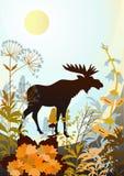 Nature indigène Image libre de droits