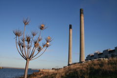 Nature and Industry. A seeding plant with power station in the background. Focused on Plant in foreground Stock Photography