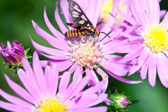 Nature Insect Pollination royalty free stock photo