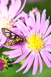Nature Insect Pollination Stock Photo