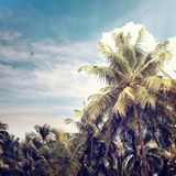 Nature-42. Intage nature beach background in summer style Royalty Free Stock Photography