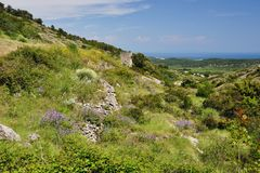 Nature on the island of Vis Stock Photography