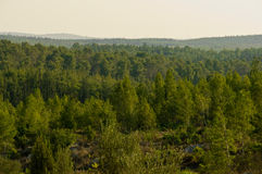 Nature of Israel . View of the forest in Israel. Beit Shemesh royalty free stock photos