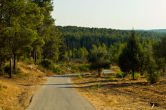 Nature of Israel . Stock Images