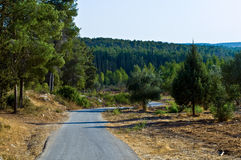 Nature of Israel . View of the forest in Israel. Beit Shemesh Stock Images