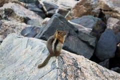 Nature. Of the Jefferson Lake Recreation Area, Colorado Royalty Free Stock Photo