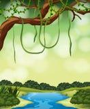 A nature jungle landscape royalty free illustration