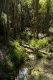 Nature of Kangaroo valley Stock Photography