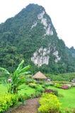 Nature at KhaoSok , Thailand Stock Photos