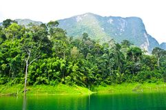 Nature at KhaoSok , Thailand Royalty Free Stock Photos