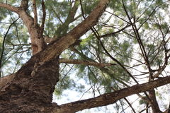 Nature - la vie verte Photos libres de droits