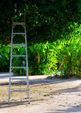 Ladder under a big tree Royalty Free Stock Photography