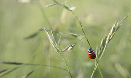 Nature, Ladybird, insecte Photo stock