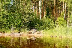 The nature of lake`s Saimaa royalty free stock image