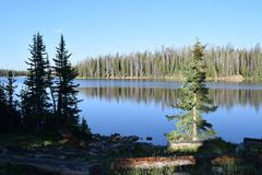 Nature, Lake, Wilderness, Reflection royalty free stock images