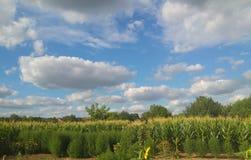 Nature landsape clouds and garden. Beautiful nature landscape clouds and garden, corn field and blue sky Stock Images