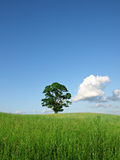 Nature landscape Stock Image