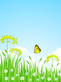 Nature landscape. Summer meadow with flowers and butterflies Stock Image