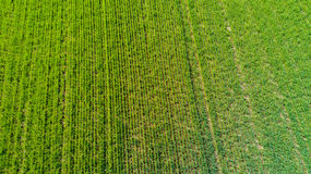 Nature and landscape: aerial view of a field, cultivation, green grass, countryside, farming, Stock Image
