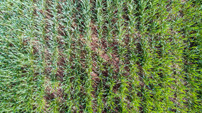 Nature and landscape: aerial view of a field, cultivation, green grass, countryside, farming, Stock Photography