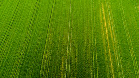 Nature and landscape: Aerial view of a field, cultivation, green grass, countryside, farming, Royalty Free Stock Image