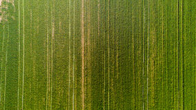 Nature and landscape: Aerial view of a field, cultivation, green grass, countryside, farming, Stock Photo