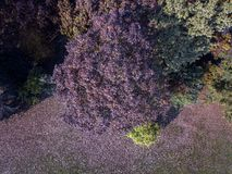 Nature and landscape: aerial view of a park, autumn foliage, leafy trees and meadow, green area Stock Image