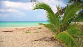 Nature landscape, amazing view sandy tropical beach with palm tree in sunny day. Nature landscape Idyllic tropical sand beach with clear sea water on background stock video footage