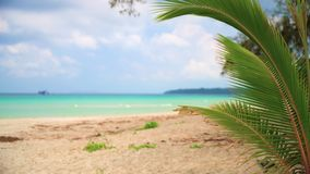 Nature Landscape, Amazing view sandy tropical beach with palm tree in sunny day. Nature landscape Idyllic tropical sand beach with clear sea water on background stock video
