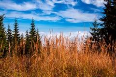 Krkonoše National Park, the highest mountain in the Czech Republic stock photo