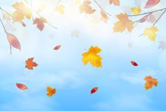 Nature Landscape Background with Falling Autumn falling red, yellow, orange, brown Maple Leaves on Blue sky, Fluffy. White Realistic clouds. Elegant Design with stock illustration