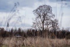 Nature landscape Royalty Free Stock Image