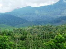 Nature landscape. Birds eye view in Kerala.. Gods own country Royalty Free Stock Photography
