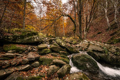 Nature Landscape  through the forest with lush green trees,. Rocks and flowing water. Autumn colors Royalty Free Stock Photography
