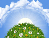 Nature landscape with green grass Stock Photos