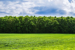 Nature, landscape. Green grass, green trees, blue sky Stock Photo