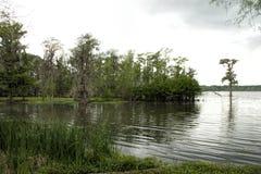 Nature Landscape by Lake Pontchartrain Stock Image