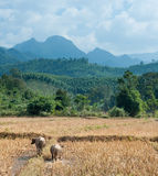 Nature landscape of Laos Stock Photos